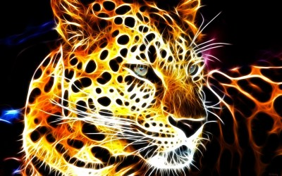 Cool Animal Backgrounds (66+ images)