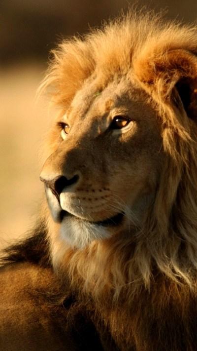 Roaring Lion Wallpaper (67+ images)