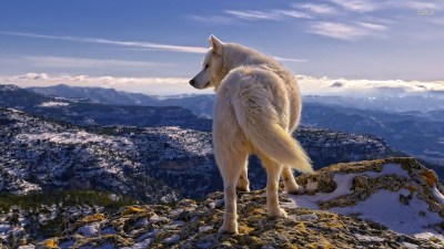 Wolf Desktop Wallpaper 1920x1080 (69+ images)