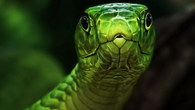 Cool Snake Wallpapers (65+ images)
