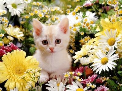 Cute Kitten Desktop Wallpaper (60+ images)