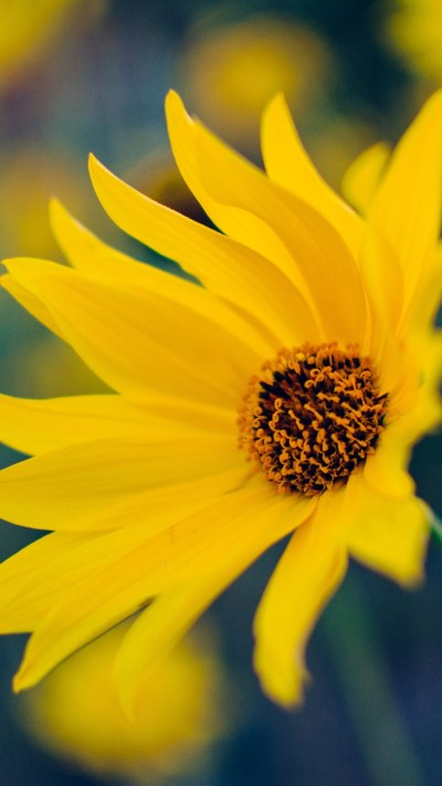 Yellow Flower Wallpaper (67+ images)