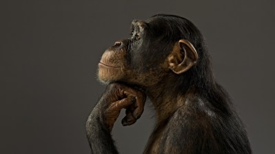 Monkey Wallpapers HD (59+ images)