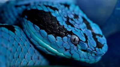 Cool Snake Backgrounds (70+ images)