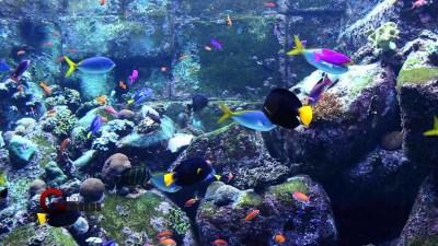 Aquarium Desktop Wallpaper (62+ images)