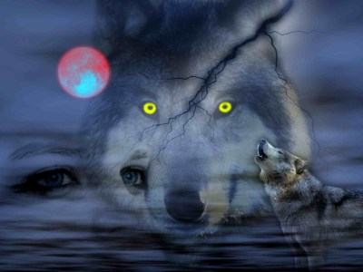 Cool Pictures of Wolves Wallpapers (59+ images)