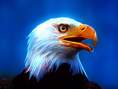 American Flag With Eagle Wallpaper (70+ images)
