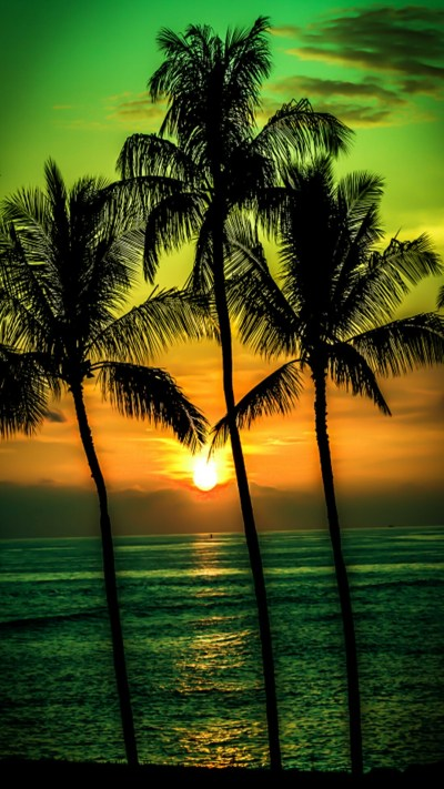 Palm Tree Wallpaper (68+ images)
