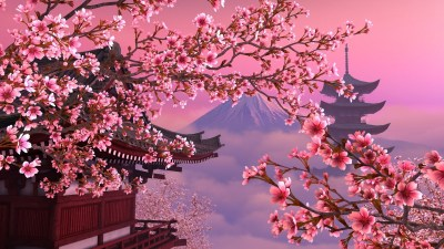 Japanese Cherry Blossom Wallpaper 1920x1080 (59+ images)