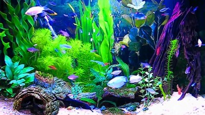 Aquarium Live Wallpaper Windows 10 (55+ images)