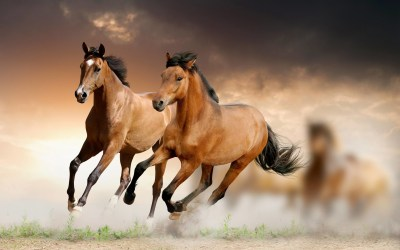 Running Horses Wallpaper (63+ images)