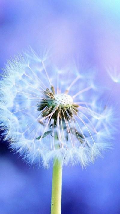 Blowing Dandelion Wallpaper (71+ images)