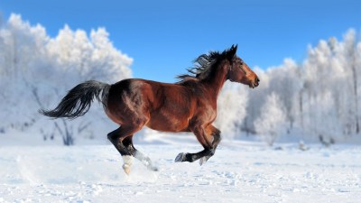 Cool Horse Backgrounds (57+ images)