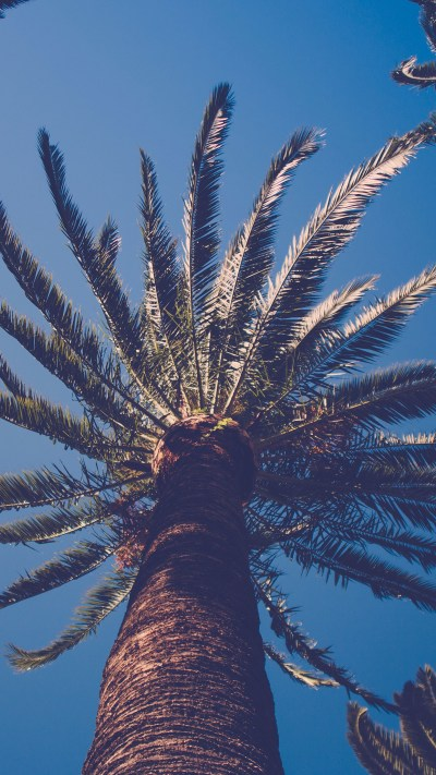 Palm Tree iPhone Wallpaper (67+ images)