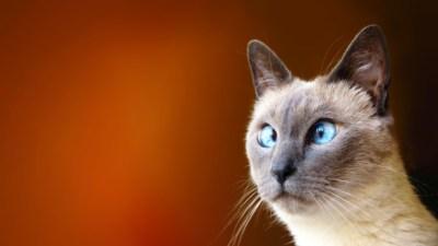 Funny Cat Wallpapers for Desktop (69+ images)