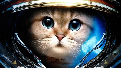 Space Cats HD Wallpaper (78+ images)