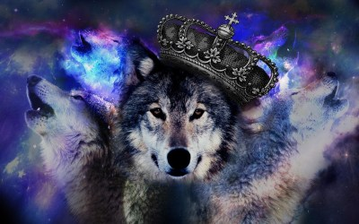 Cool Wolf Wallpaper (61+ images)