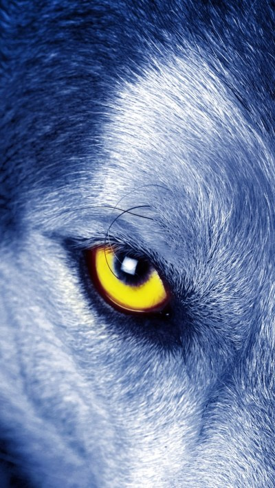 Wolf Wallpaper for iPhone (72+ images)