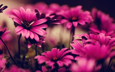 40 BEAUTIFUL FLOWER WALLPAPERS FREE TO DOWNLOAD..... - Godfather Style