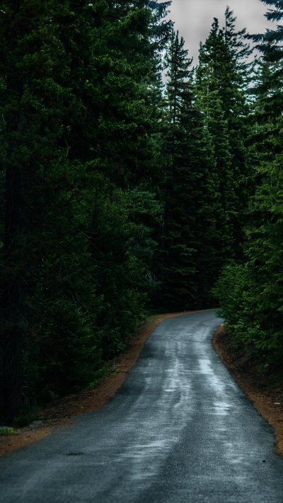 Road Through Forest Wallpaper - iPhone, Android & Desktop Backgrounds