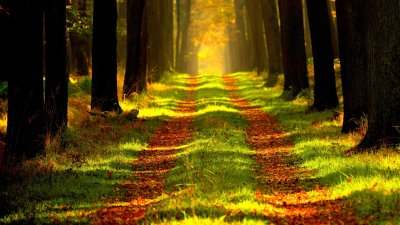 Light Path Through the Trees Wallpaper - iPhone, Android & Desktop Backgrounds