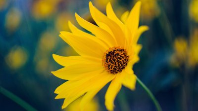 Yellow Flower Wallpaper - iPhone, Android & Desktop Backgrounds