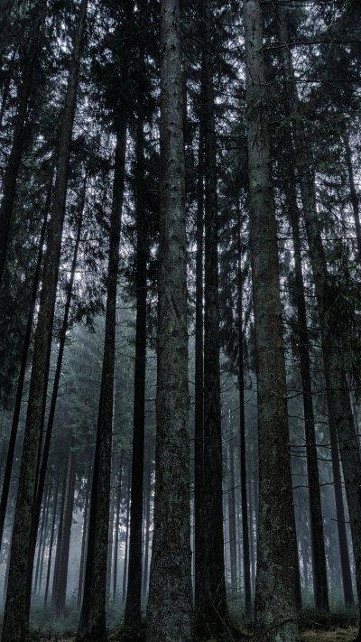 Dark Forest Wallpaper - iPhone, Android & Desktop Backgrounds