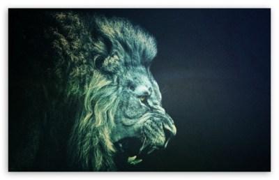 LION 4K HD Desktop Wallpaper for 4K Ultra HD TV • Wide & Ultra Widescreen Displays • Tablet ...