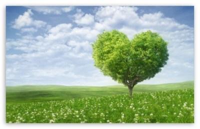 Love Tree 4K HD Desktop Wallpaper for 4K Ultra HD TV • Wide & Ultra Widescreen Displays