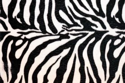 Cool Zebra Prints