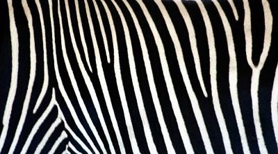 Zebra Print Wallpapers Archives - HD Desktop Wallpapers | 4k HD