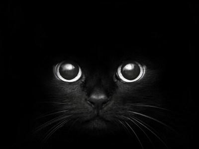 black cat sweet - HD Desktop Wallpapers | 4k HD