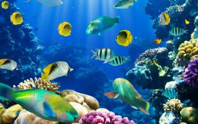 fish wallpaper live - HD Desktop Wallpapers | 4k HD