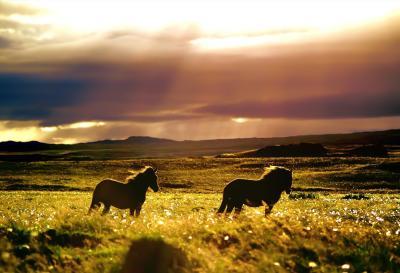 prairie wallpaper - HD Desktop Wallpapers | 4k HD