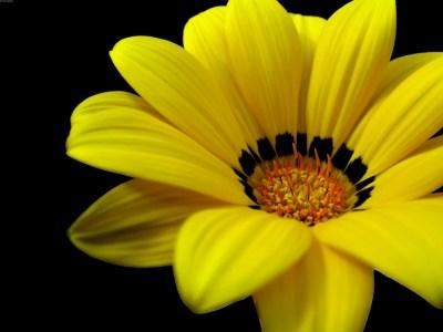 yellow flower wallpaper A8 - HD Desktop Wallpapers   4k HD