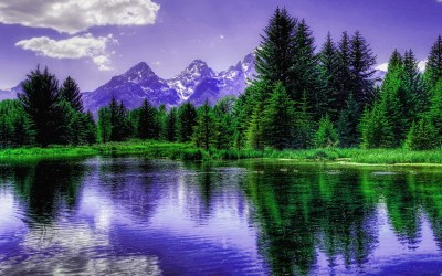Purple Mountains behind the trees HD wallpaper | HD Latest Wallpapers