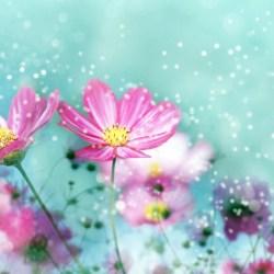 Flower Backgrounds 18213 2560x1600 Px Hdwallsource Com