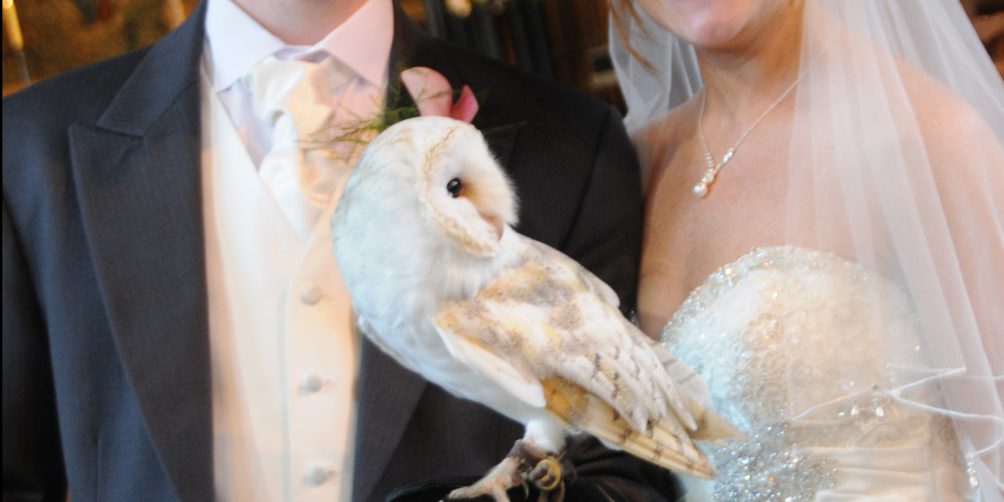 owl carrying wedding rings owl wedding ring This Owl Ring Bearer Is A Harry Potter Fan S Dream Come True