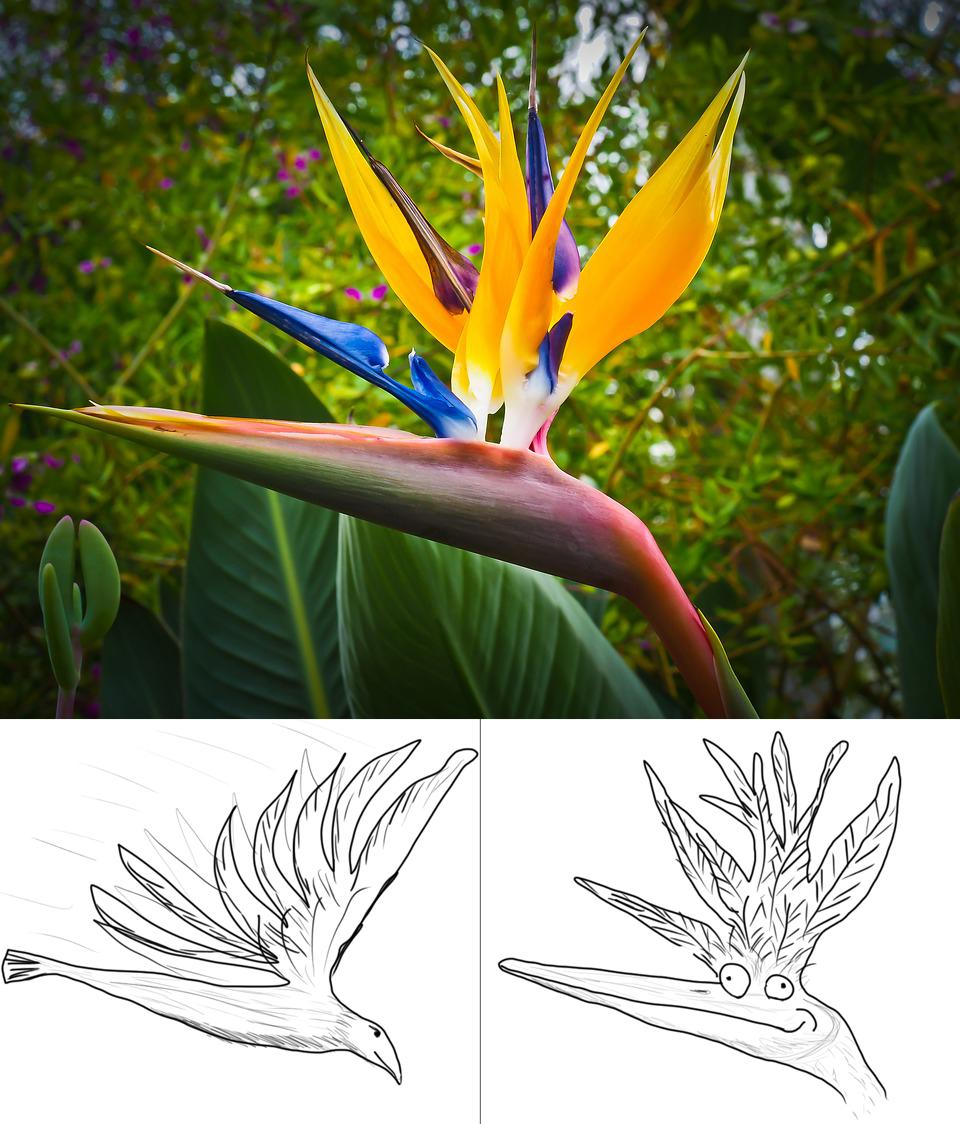 I m 37 years old  and just today realized it s called bird of     I m 37 years old  and just today realized it s called bird of paradise  because it looks like the left picture  not the right