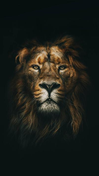 Lion Wallpaper for any iPhone. : iphonewallpapers