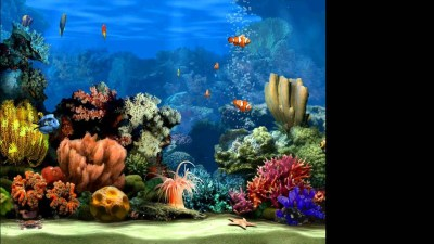live marine aquarium screensaver 2.0 - YouTube