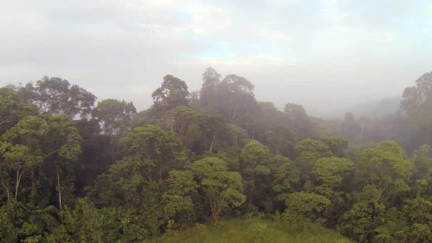 Lush Green Mountain Sides Of The Amazon Rain Forest 3 Stock Footage Video 2561384 - Shutterstock