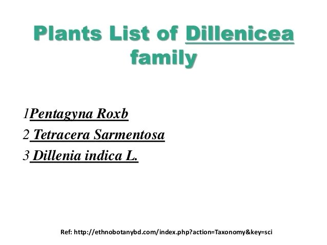 A Comprehensive Review Study Of Antioxidant Potential of Dillenicea F…