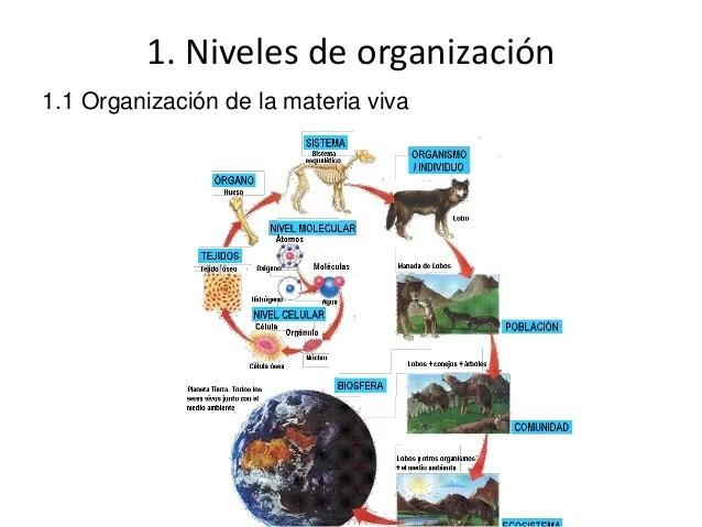 Tema 1. la organización del cuerpo humano