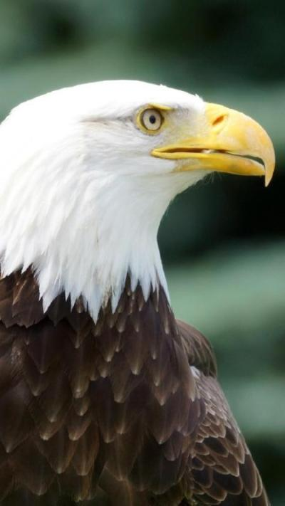 Eagle Face. Live Wallpapers APK Download - Free Personalization APP for Android | APKPure.com