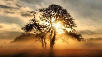 Misty Sunrise Behind The Tree Full HD Wallpaper and Background Image | 1920x1080 | ID:498413