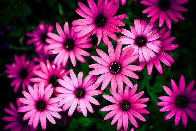 27+ Daisy Backgrounds, Wallpapers, Images, Pictures | Design Trends - Premium PSD, Vector Downloads