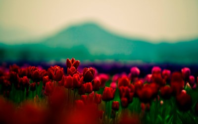 20+ Cool Flower Backgrounds | Wallpapers | Free Creatives