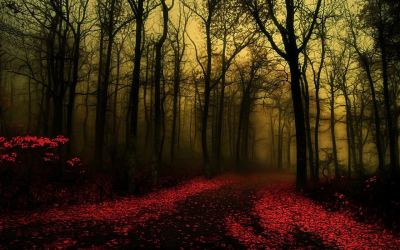20 Forest BackGrounds | WallPapers | Free Creatives