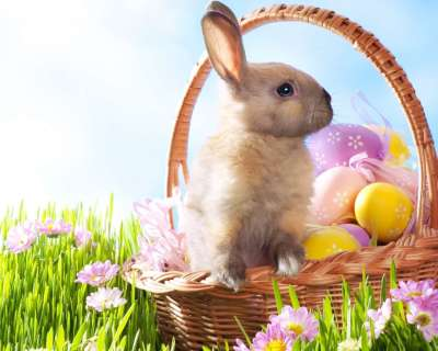 30+ Easter Bunny Wallpapers, Backgrounds, Images | FreeCreatives